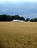 across fields to St Ives farm Campsite